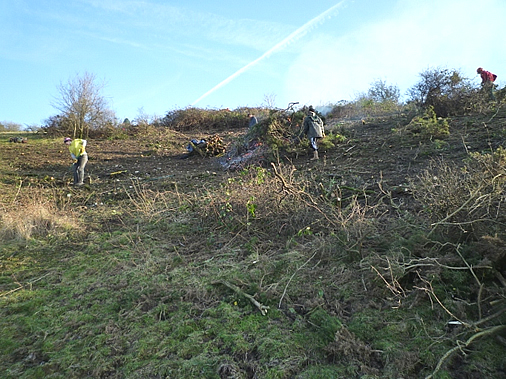 Some people clearing scrub on a hillside