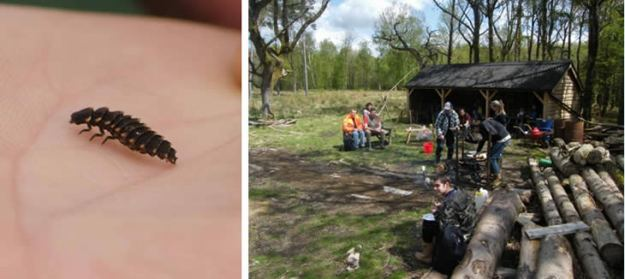 Photos of a glowworm larva on a hand and of a number of people working in a woodland setting