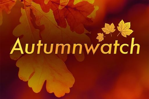 BBC Autumnwatch 2016