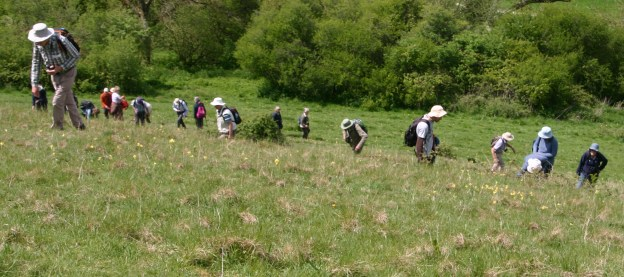 A number of people spaced out across a grassy hillside