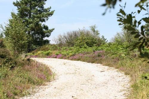 Track between grass verges