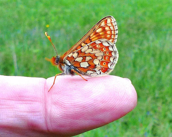 Small butterfly on a person's finger