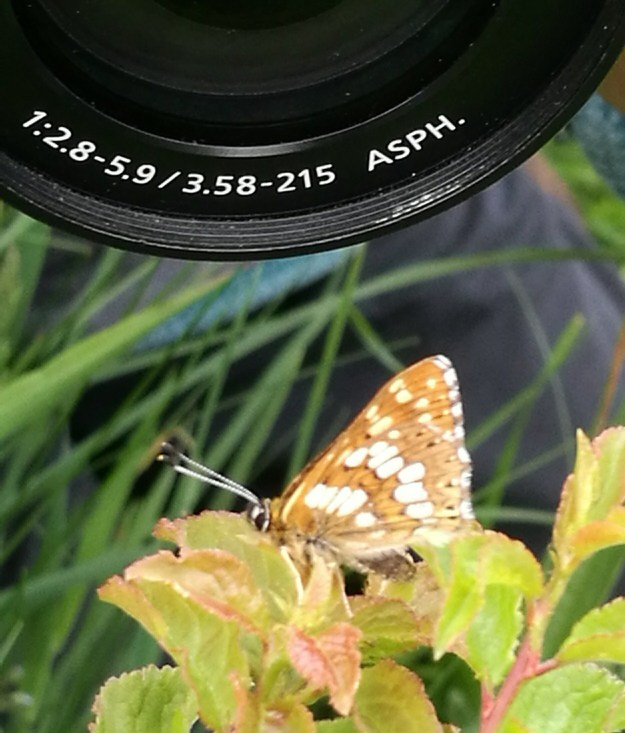 Very small butterfly being loomed over by a large camera lens