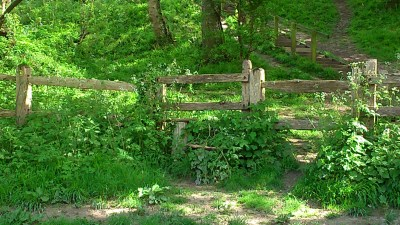 Rustic style in amongst lots of growth, will hillside behind