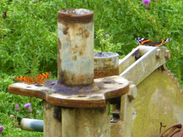 view of A RedAdmiral and Comma on old metal machinery soaking up the heat