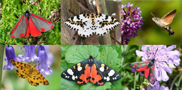 Six very colourful moths