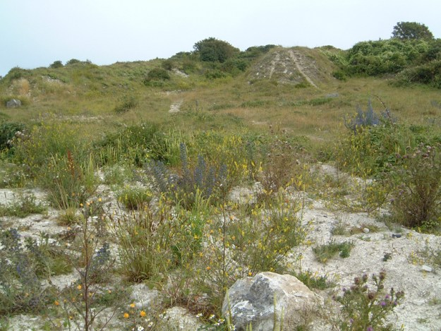 A view of broadcroft quarry showing limestone rocks and grass sward