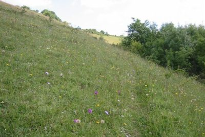 Grassy hillside with wild flowers