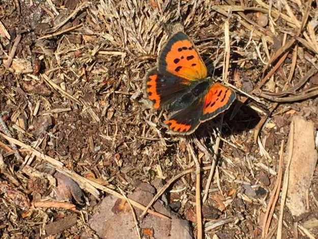 View of orange and black butterfly on the ground