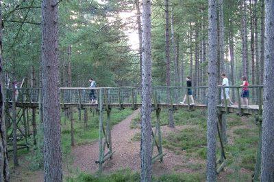 Coniferous woodland
