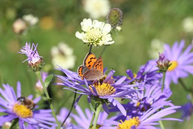 Orange butterfly with black markings on purple flower