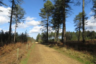 Trail across heathland