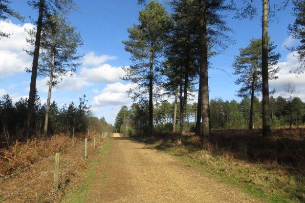 Trail across heathland