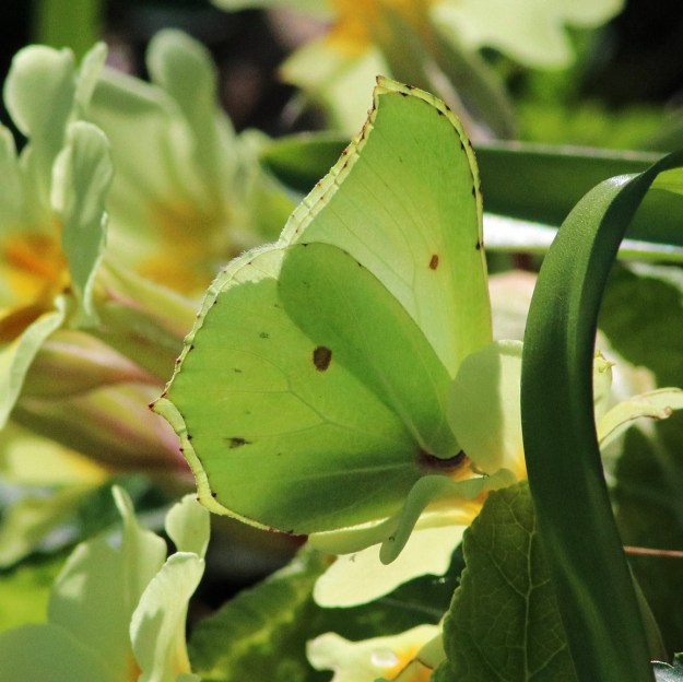 View of a yellow butterfly resting on a plant
