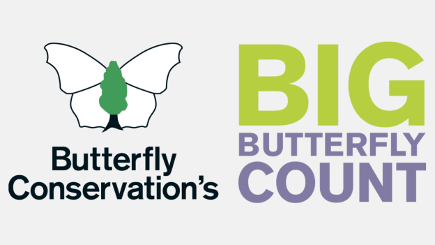 Big Butterfly Count 2020