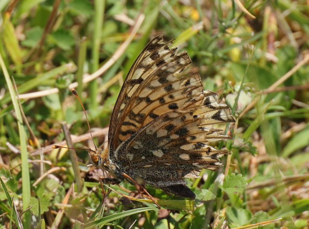 View of a resting brown butterfly with some black and lighter coloured markings