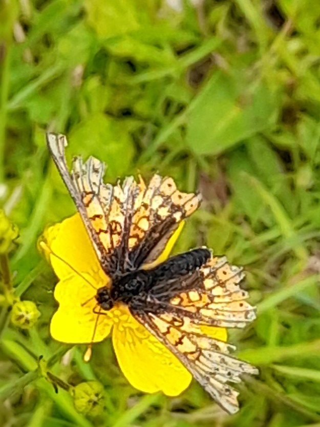 View of an orange butterfly with black and white markings resting on a yellow flower