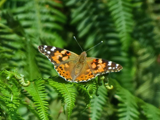 An orange butterfly with black and white markings resting on green leaves