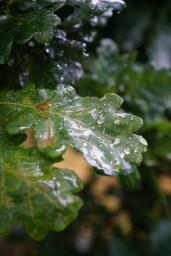 Det der vokser i jorden nyder regnen