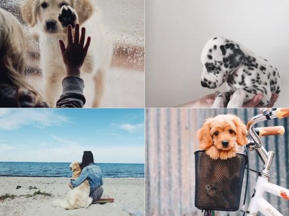 inspiração-fotos-com-seu-cachorrinho7