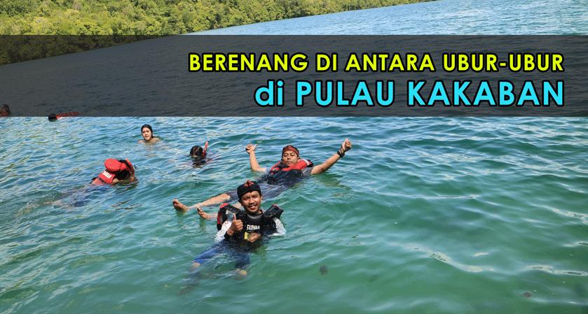 Berenang di antara Ubur-ubur di Pulau Kakaban