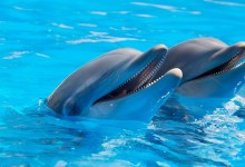 Photo of Delfini imajo svoje najboljše prijatelje