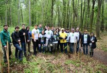 Photo of V Betnavskem gozdu posadili medovita drevesa