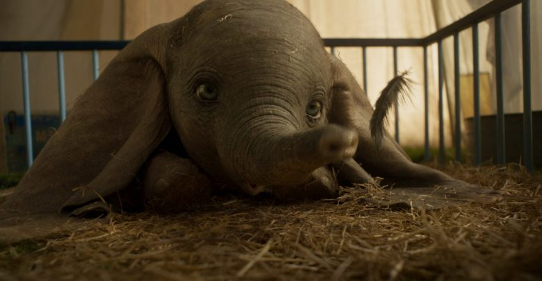 Slonček Dumbo se igra s peresom