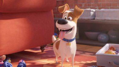 Photo of Film: Skrivno življenje hišnih ljubljenčkov 2 [RECENZIJA]