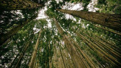 Photo of Mlada drevesa bi lahko raven ogljika v zraku zmanjšala
