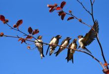 Photo of V Severni Ameriki in Evropi beležijo upad števila ptic za tretjino