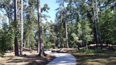 Photo of Nov arheološki park v botaničnem vrtu UM