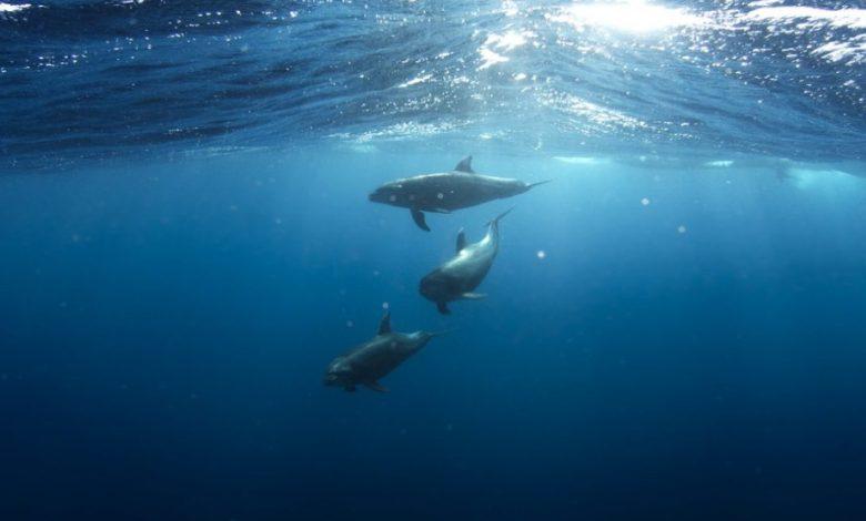Moderni ribolov, mreže, ribolov, kiti, delfini, sesalci, riba, želva, robu izumrtja