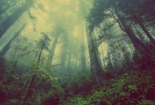 Photo of V ZDA našli najstarejši gozd na svetu, star več kot 385 milijonov let