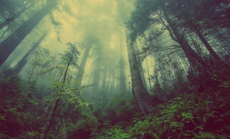 najstarejši gozd, New York, Usoden, drevo, gozd,