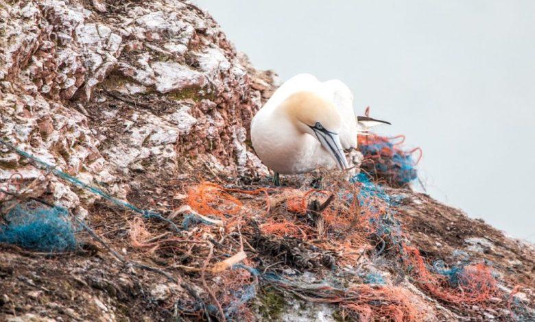 Mikroplastika, morje, okolje, onesnaženost, plastika, plastike, plastičnih izdelkov
