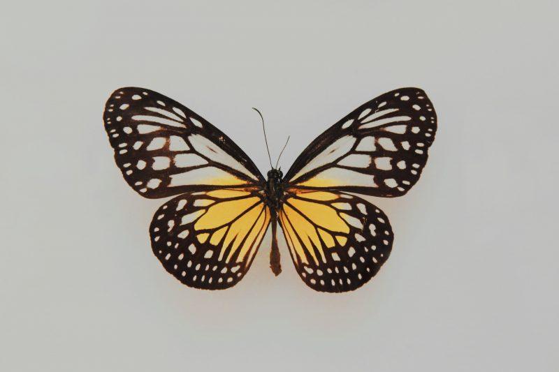 Zoe Xirocostas, Življenjska doba, zdravje, kromosomi, heterogametski spol, samice, samci