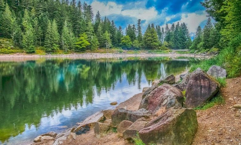 Mednarodni dan biotske raznovrstnosti, Praznovanje, Biotska, okolje, narava,