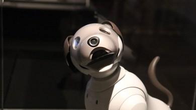 Photo of V Bangkoku pri preprečevanju širjenja pandemije pomaga tudi robotski pes