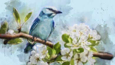 Photo of Mladinska knjiga razpisala sedmi natečaj za nagrado modra ptica