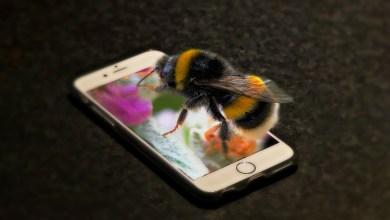 Photo of Študija: Sevanje mobilnih telefonov bi lahko škodovalo žuželkam