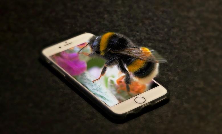 Sevanje mobilnih telefonov, AFP, mobilni telefoni, sevanje, žuželke, gsm, mobitel, študija, raziskava