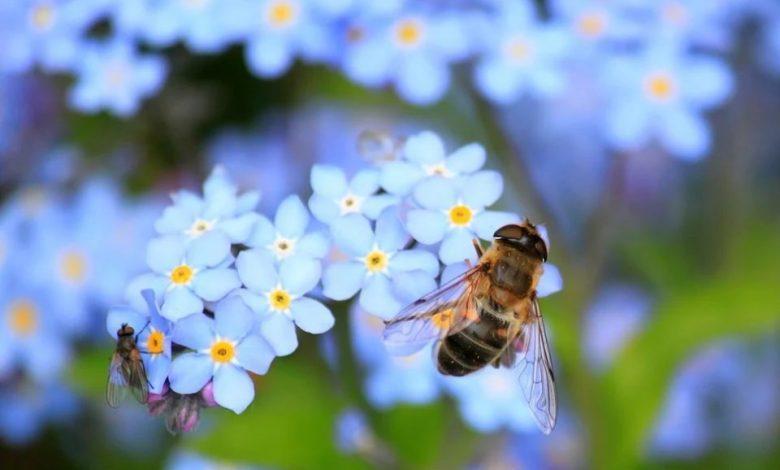 Čebelji strup,
