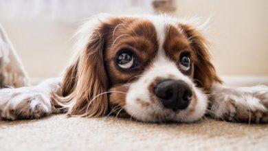 Photo of Uporaba pirotehnike vznemirja in povzroča trpljenje živali