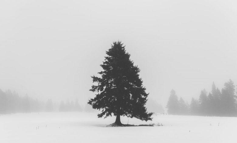 osamljenost, osamljenosti, dotik, kako se boriti proti osamljenosti, kako preživeti praznike, kako preživeti praznike v karanteni, korona