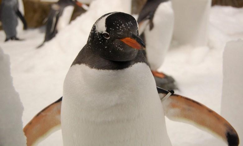božične filme, london, pingvini,