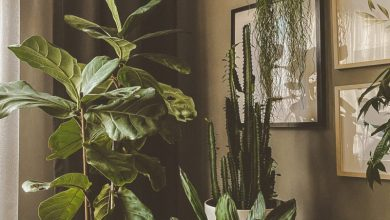 Sobne rastline, Drexel, zdravje, duševno zdravje, rastline, zrak, kakovost zraka