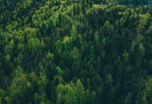 gozdovi, gozdove, gozdov, gozdu, Evropa, trajnostni turizem, Popotniško združenje Slovenije,
