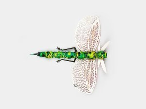 Insect 4