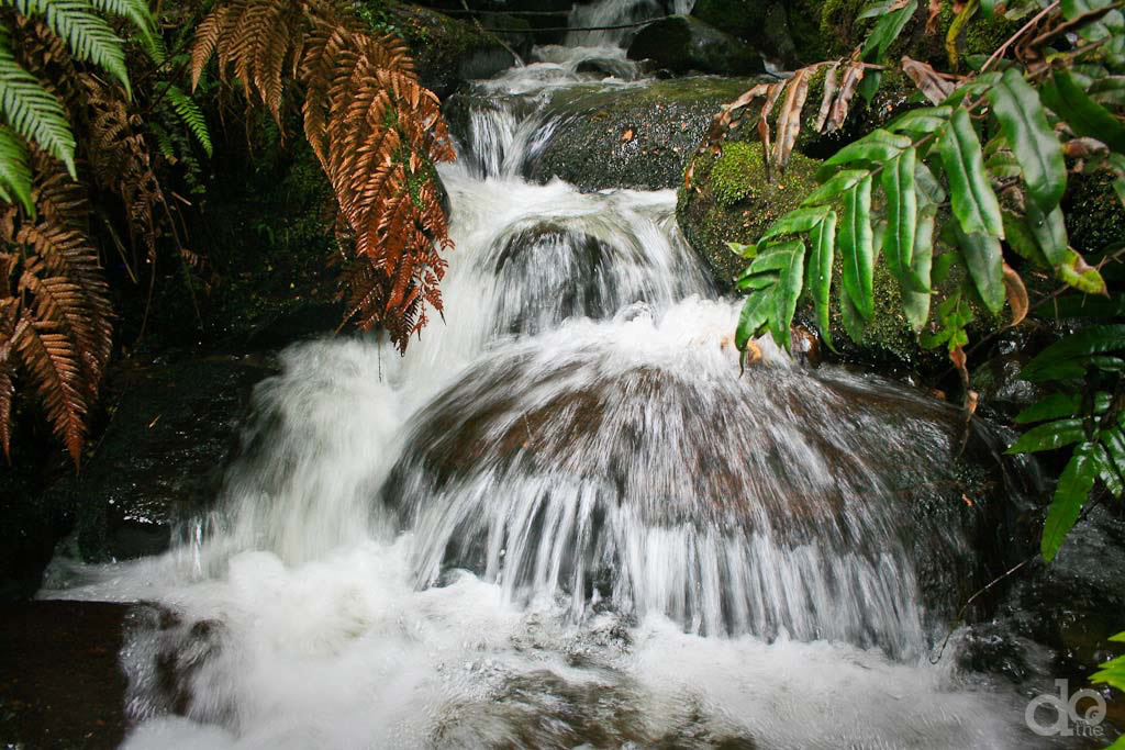 Warburton-Rainforest-Gallery-Stream-Rocks